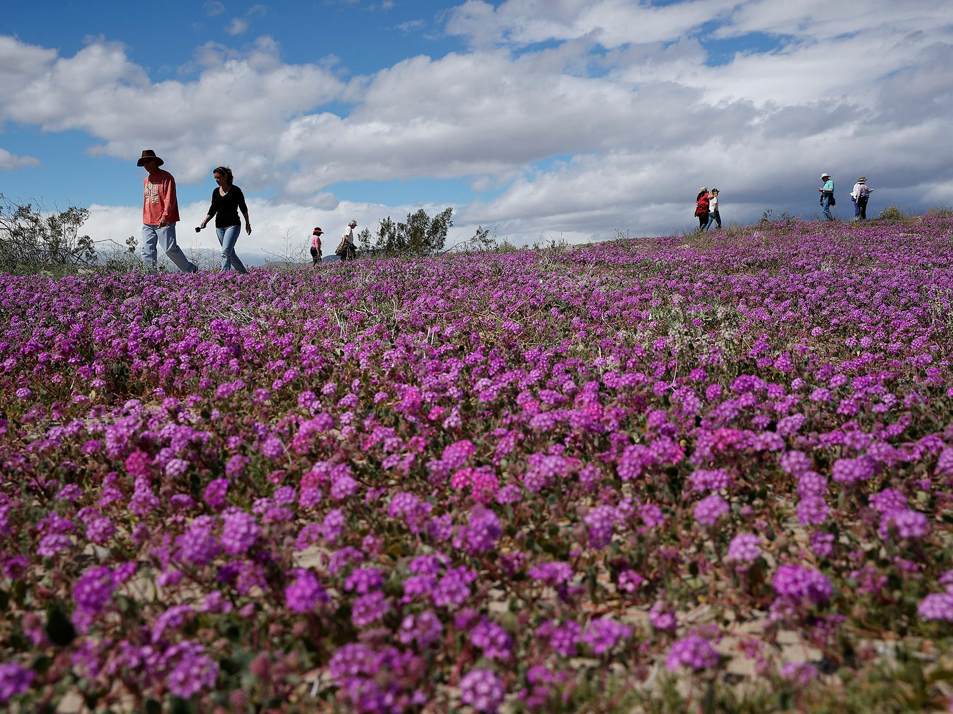 """People walk among wildflowers in bloom near Borrego Springs, Calif. March 6, 2019. Two years after steady rains sparked seeds dormant for decades under the desert floor to burst open and produce a spectacular display dubbed the """"super bloom,"""" another winter soaking this year is shaping up to be possibly even better."""