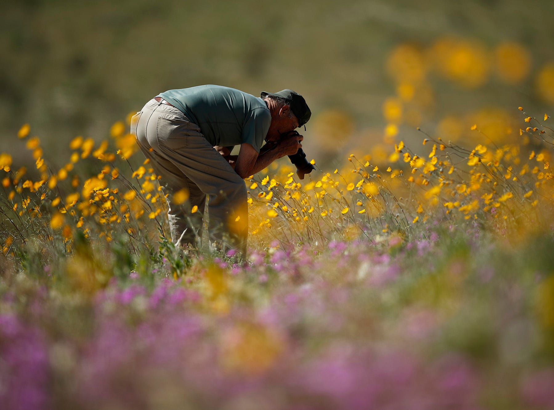 A man takes pictures of wildflowers in bloom near Borrego Springs, Calif. March 6, 2019.