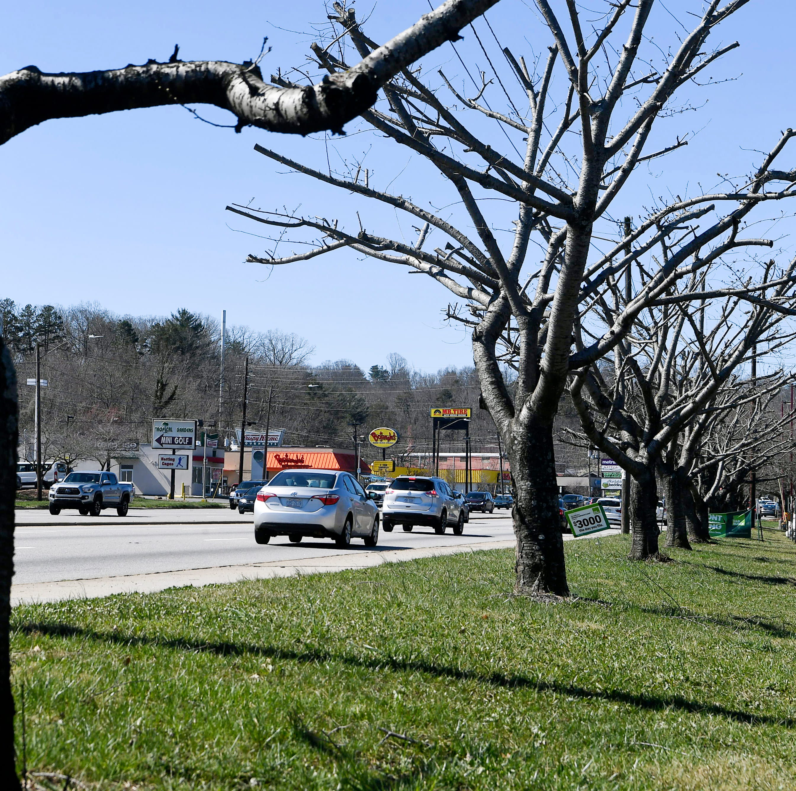 Patton Avenue business owner levied $19K fine for illegal tree topping, won't have to pay
