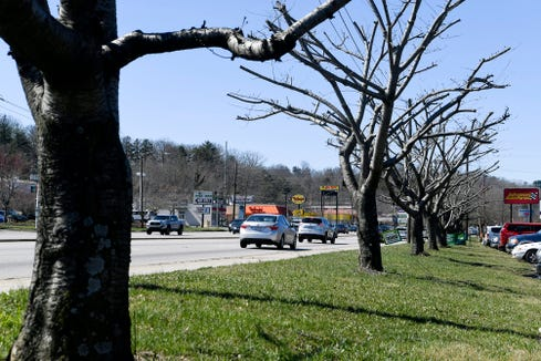 The branches of trees have been cut along Patton Avenue in West Asheville.