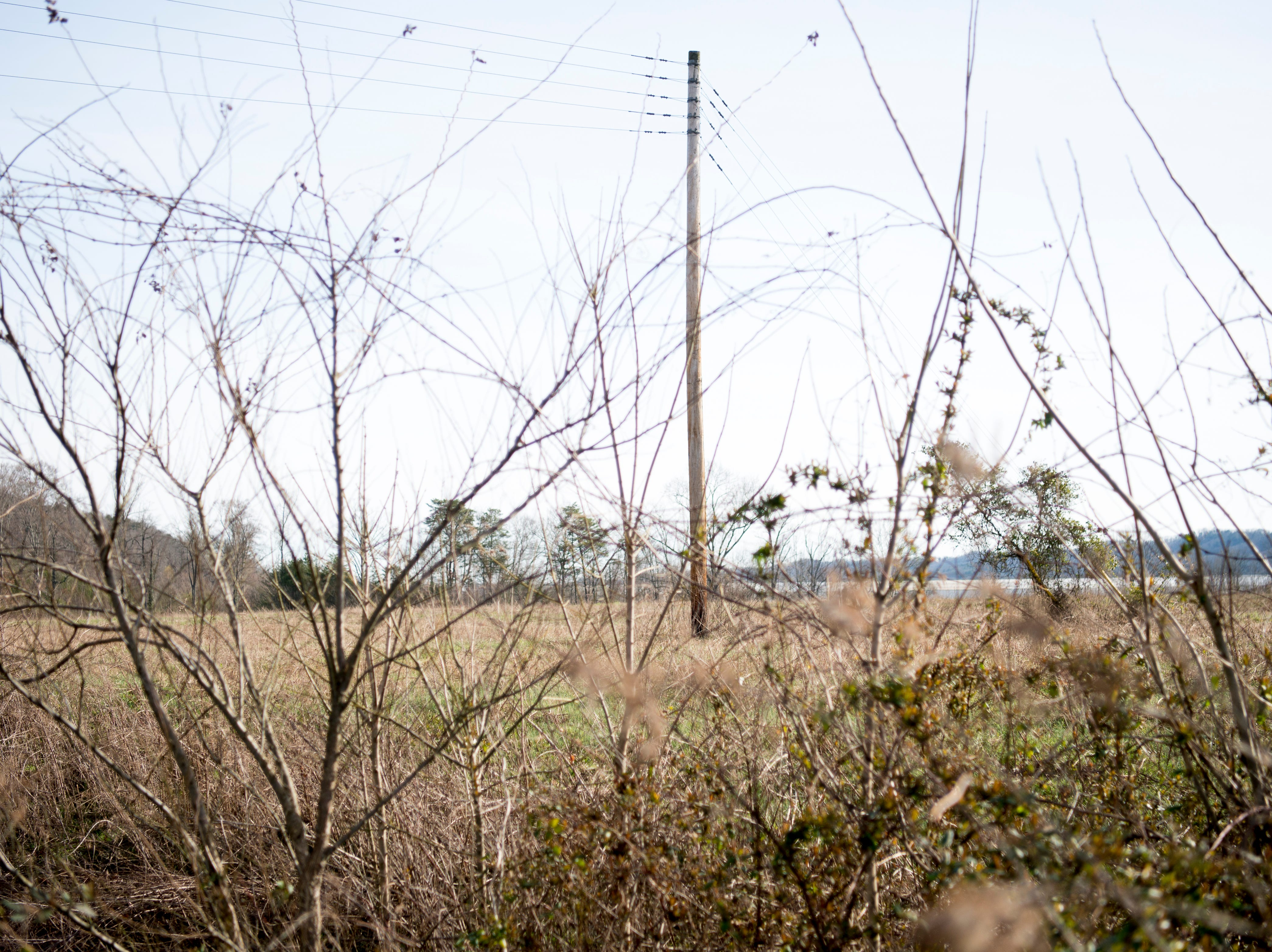 Overgrowth can be seen at the site of the future Aspire Park in Clinton, Tennessee on Tuesday, March 12, 2019. The Hollingsworth Foundation is looking to redevelop nearly 450 acres of land off Yarnell Road into a recreational park.