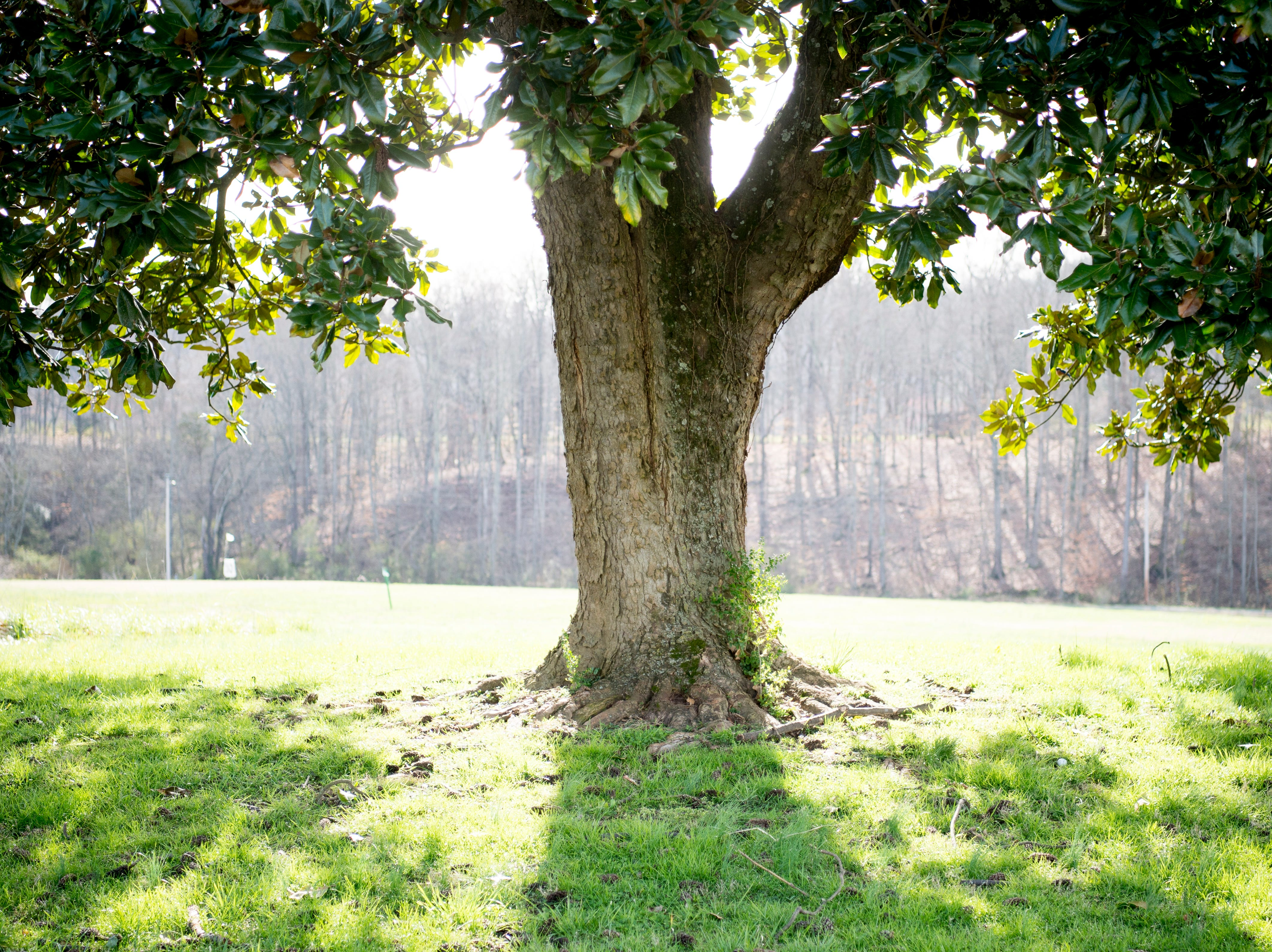 A large tree provides shade at the site of the future Aspire Park in Clinton, Tennessee on Tuesday, March 12, 2019. The Hollingsworth Foundation is looking to redevelop nearly 450 acres of land off Yarnell Road into a recreational park.