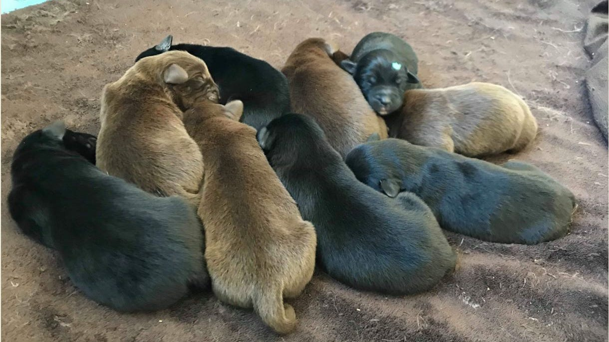 Brie, Cheddar, Swiss: Marshfield puppies rescued from trash can named after Wisconsin cheeses