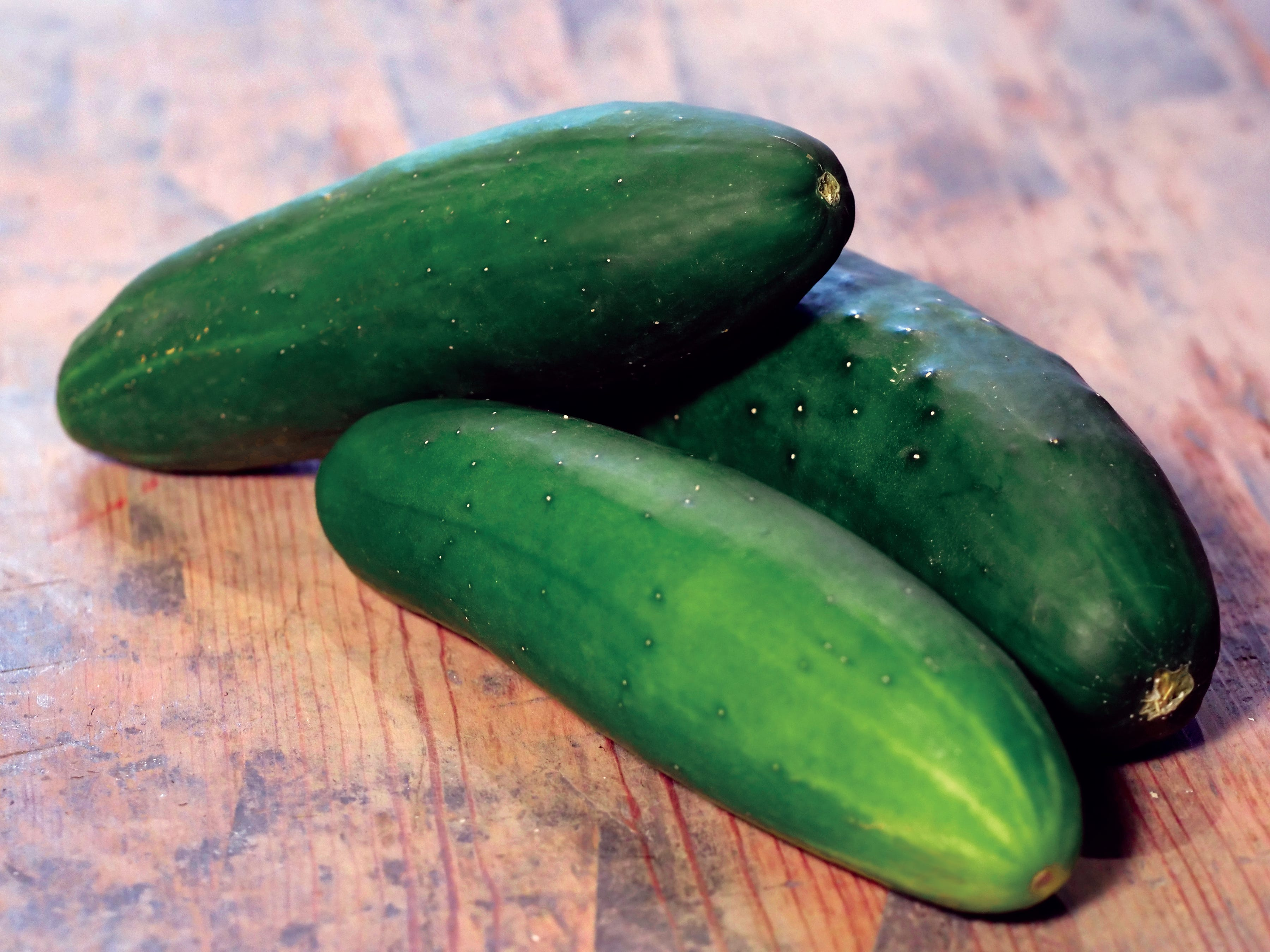Cucumber Park's Whopper, grown from seed, produces fruit in 55 days.