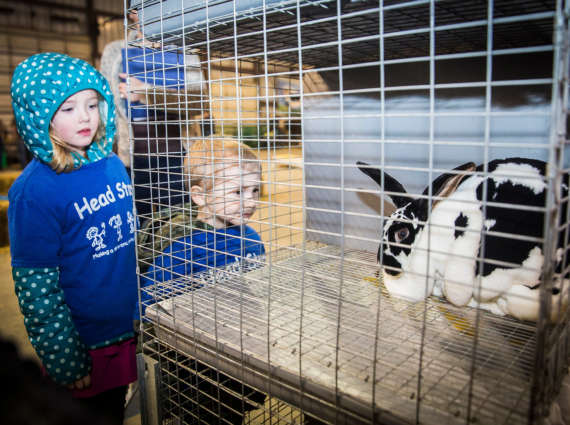 Attendees of the 2019 Delaware County Farm Festival enjoyed sheep shearing and cow milking demonstrations, games and food at the Delaware County Fairgrounds Tuesday. The event continues until 8 p.m. Tuesday and from 8:30 a.m. to 8 p.m. Wednesday.