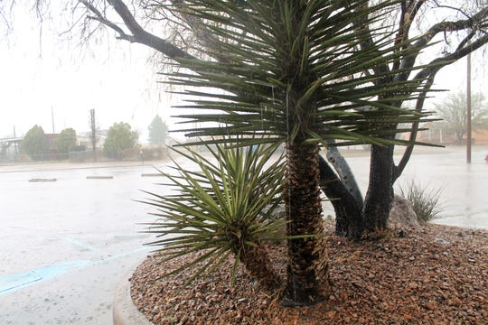 Rain drips from a palm tree on 24th Street in Alamogordo during a rain storm March 12.