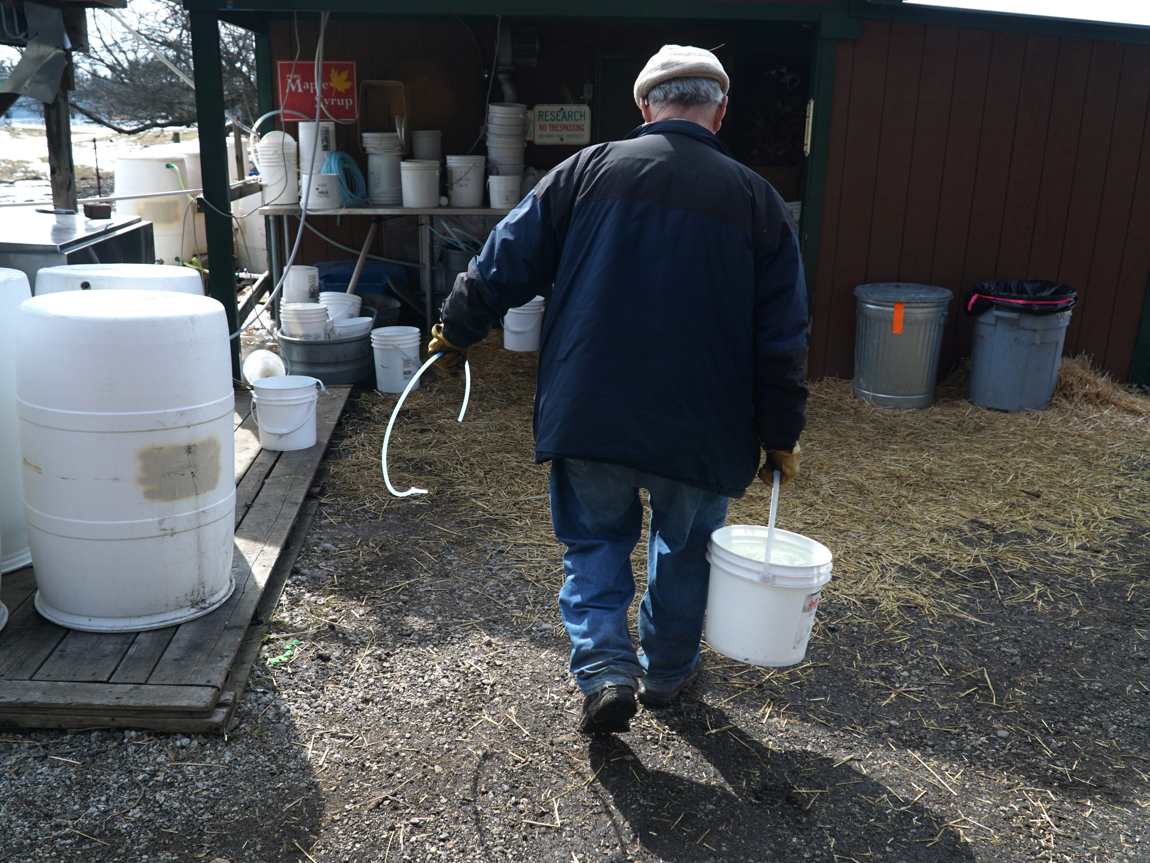 McInnis brings back one full bucket of sap to add to the sugar shack's (seen ahead of him) evaporator.
