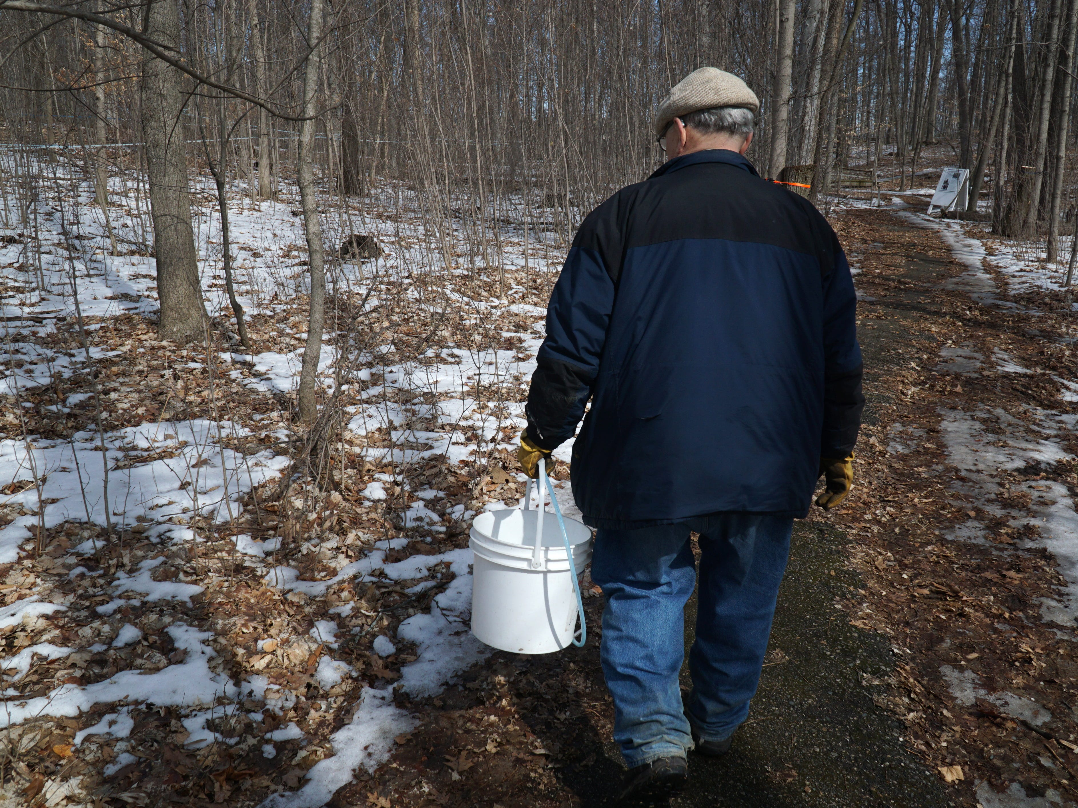 McInnis heads into Tollgate's sugar bush to gather some sap from its trees.