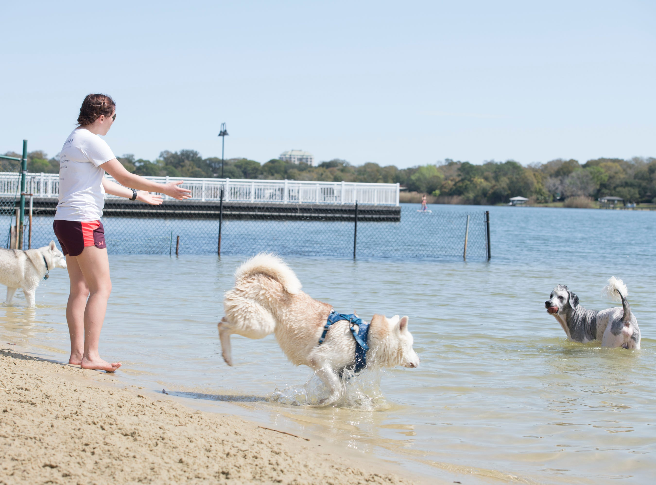 Shelby Hairr calls her dog Willie Nelson, right, to bring back the ball at Bayview Park's dog park in Pensacola on Tuesday, March 12, 2019.  Navarre residents hope to get a similar dog park for their city.