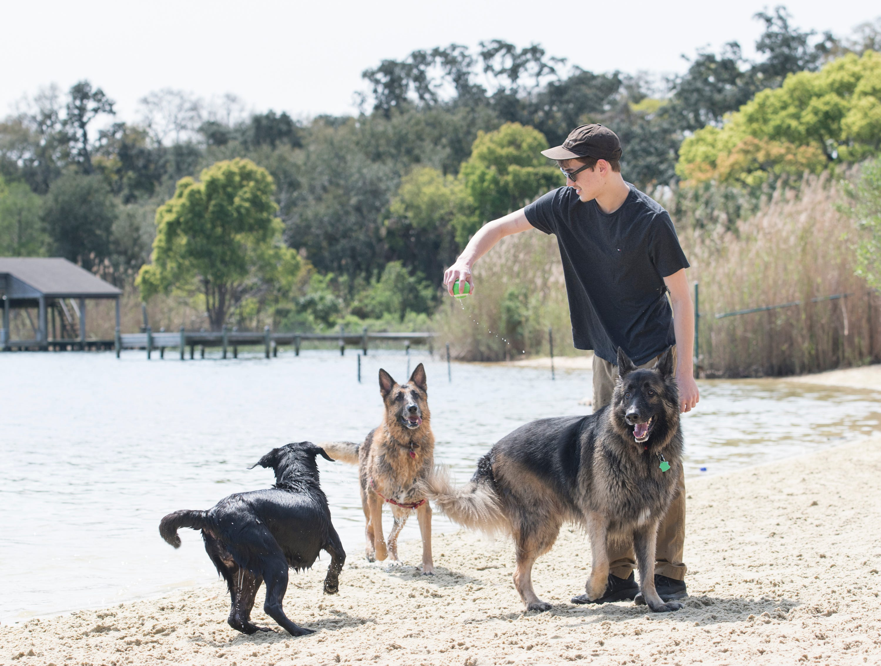 Cameron Griffis gets ready to toss a ball for his dog Spirit, left,  and other playful pooches at Bayview Park's dog park in Pensacola on Tuesday, March 12, 2019.  Navarre residents hope to get a similar dog park for their city.