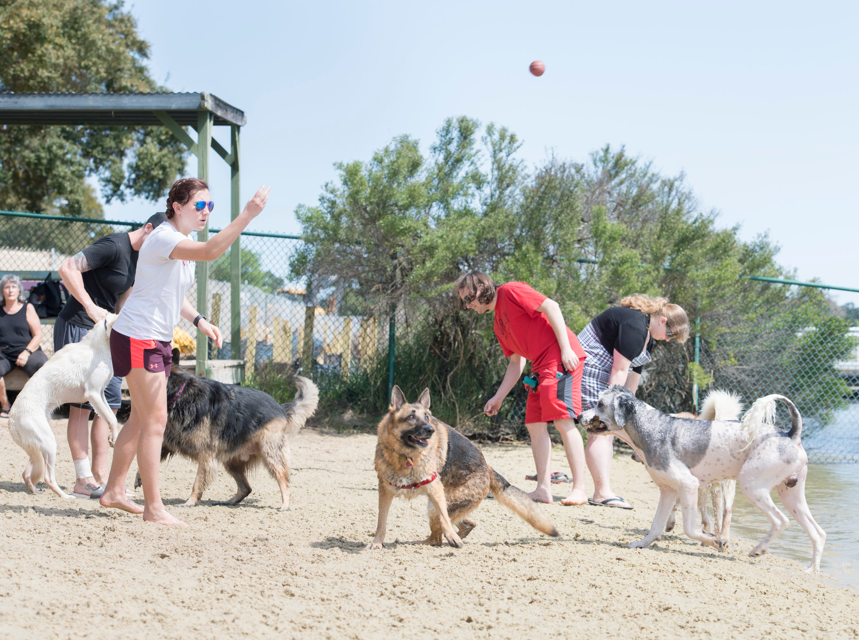Shelby Hairr tosses a ball for the dogs at Bayview Park's dog park in Pensacola on Tuesday, March 12, 2019.  Navarre residents hope to get a similar dog park for their city.