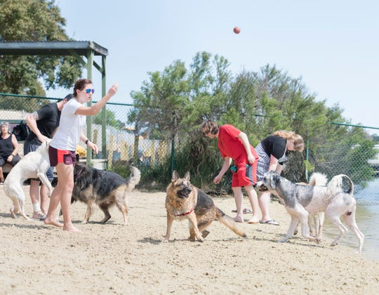 Shelby Hairr tosses a ball for the dogs at Bayview Park's dog park in Pensacola on Tuesday. There is a push by some Navarre residents to open a similar dog park for their community.