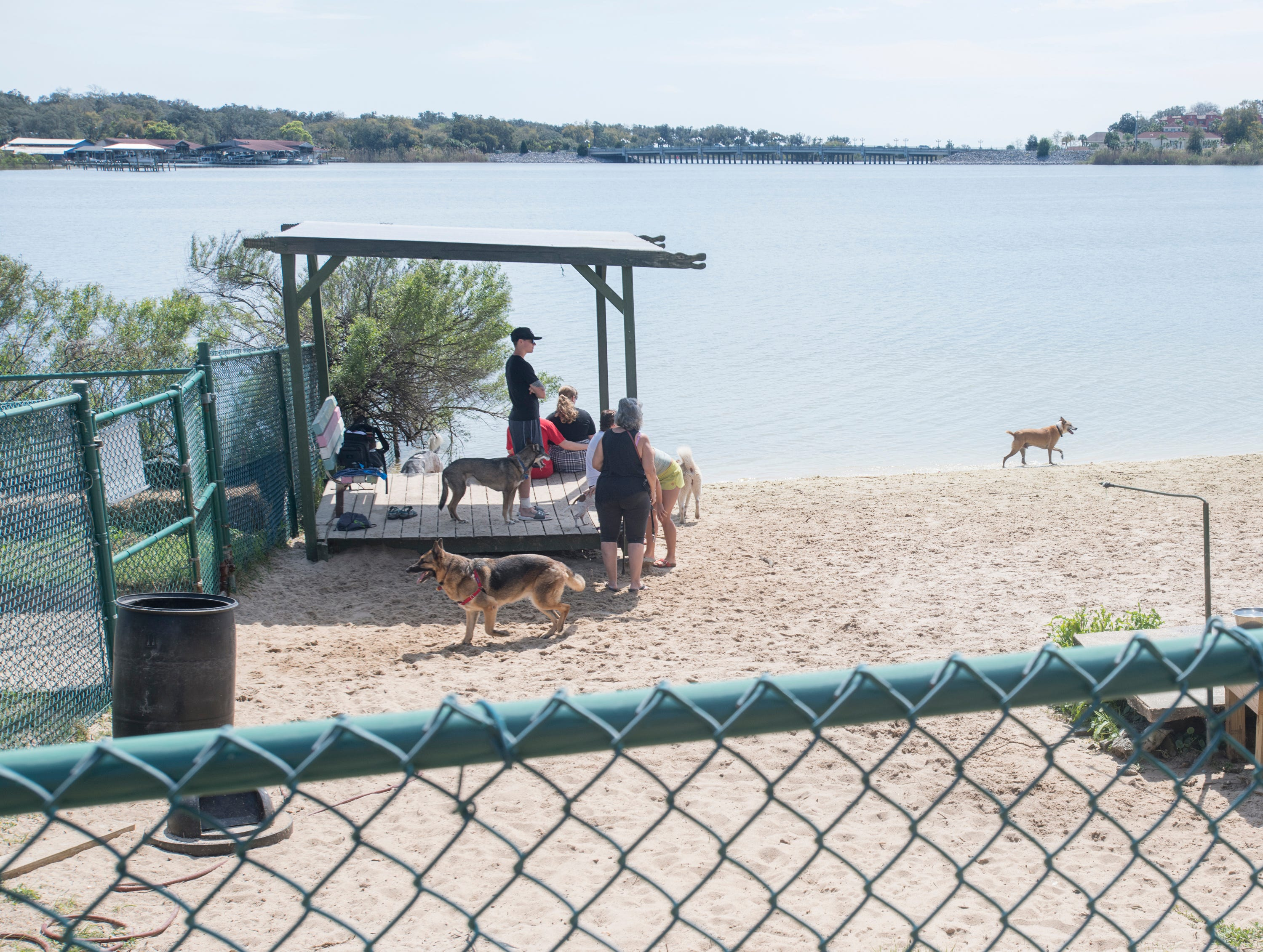 Canines enjoy the beautiful day at Bayview Park's dog park in Pensacola on Tuesday, March 12, 2019.  Navarre residents hope to get a similar dog park for their city.