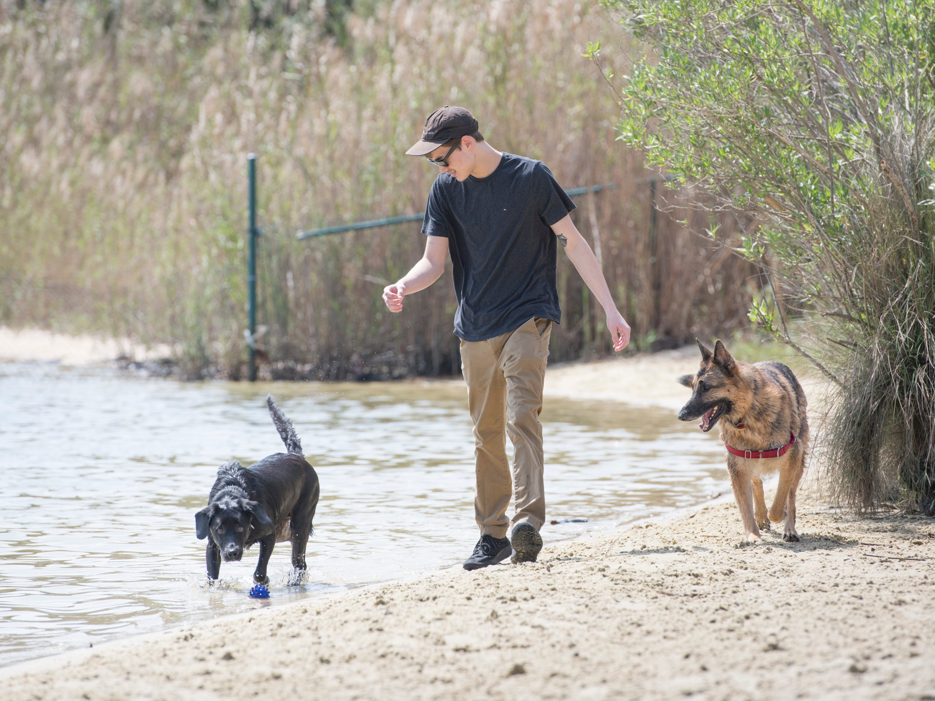 Cameron Griffis walks with his dog Spirit, left and a tag along pooch at Bayview Park's dog park in Pensacola on Tuesday, March 12, 2019.  Navarre residents hope to get a similar dog park for their city.