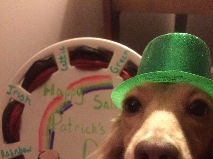 Daisy poses for a St. Patrick's Day photo shoot.