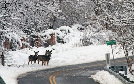 Daylight saving time and an increase in wildlife along the roadways has caused an uptick in animal collisions with vehicles during the winter.