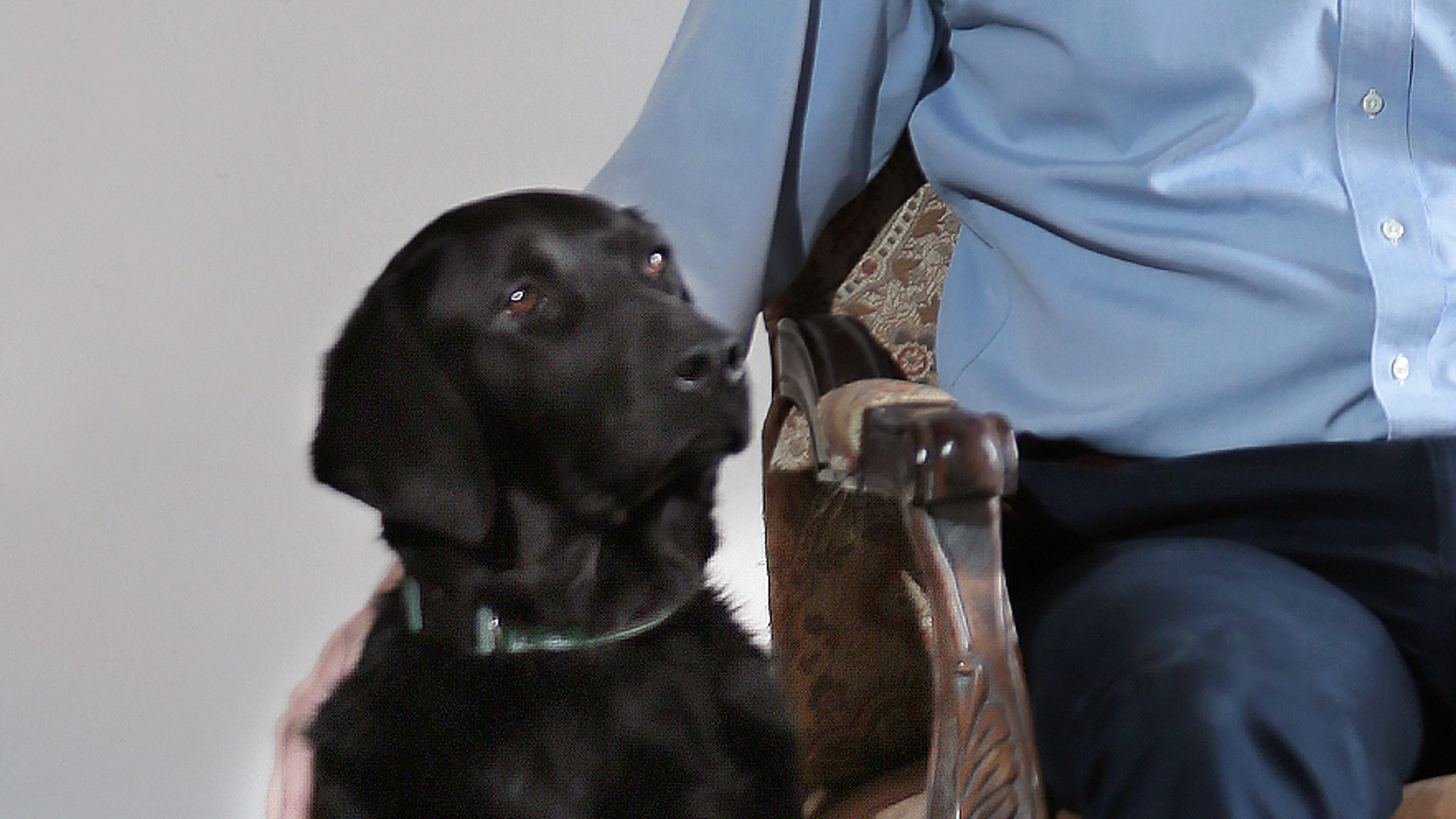 Beto O Rourke 2020 Twitter Reacts To Dog On His Vanity