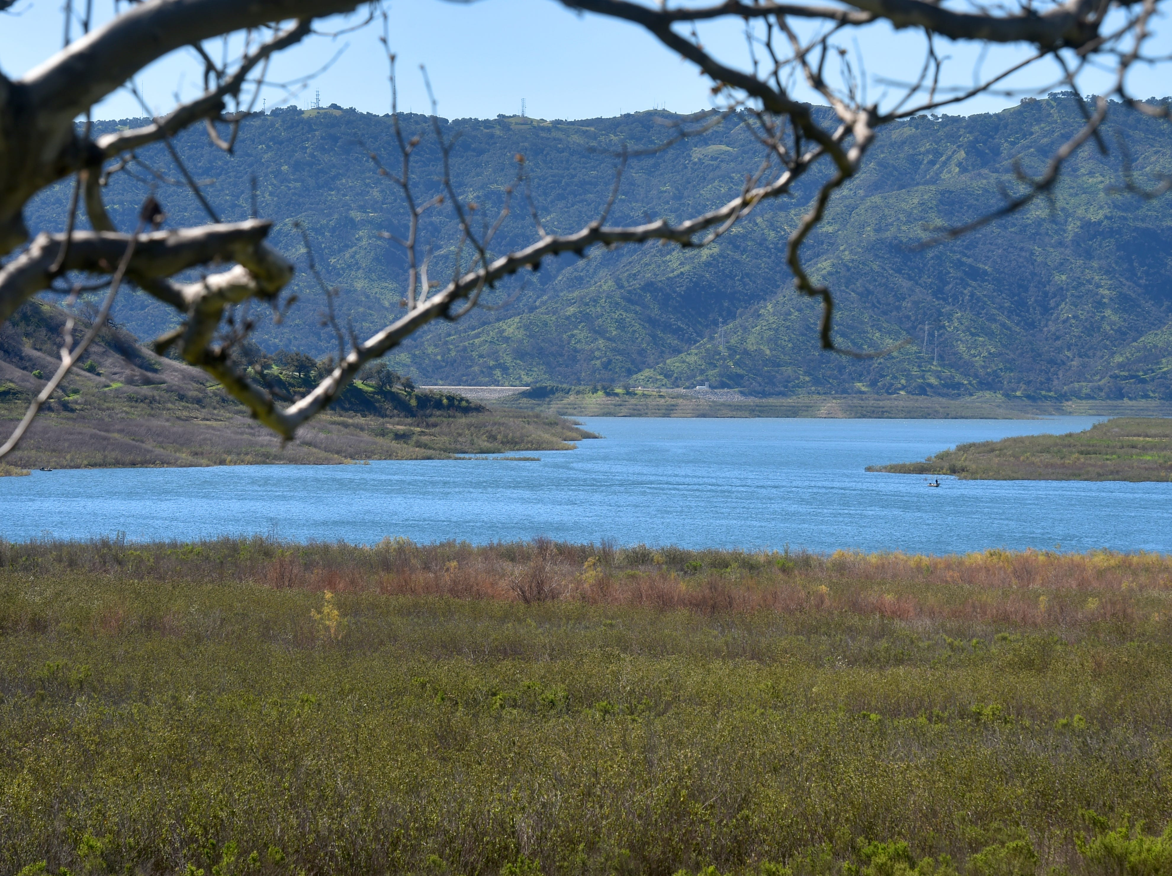 Grasses flourish throughout the Lake Casitas Recreational Area on Tuesday. The lake is at 101,687 acre-feet or about 43 percent of its capacity.