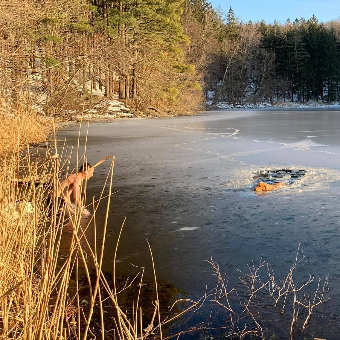 Yonkers man, dog rescue dogs from icy Irvington Reservoir; see video