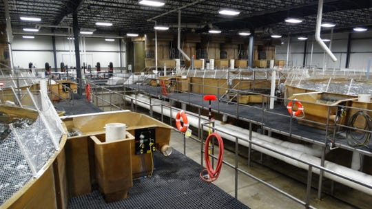 AquaBounty Technologies plans to farm AquAdvantage Salmon at its facility near Albany, Indiana.