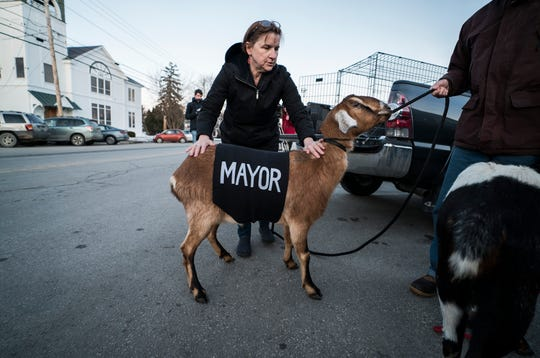 Sally Stanton smooths out a sash reading 'Mayor' on Lincoln, a 3-year-old Nubian goat, before a swearing in ceremony at the town offices in Fair Haven, Vt., on Tuesday, March 12, 2019. The Mayor-elect goat, owned by Sally and Chris Stanton, ran for the special pet election after being nominated by their grandson Sullivan Clark as part of a playground fundraiser.