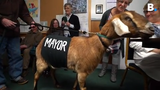 Grandson of Fair Haven school teacher and goat owner nominates 'Lincoln' for mayor in contest to raise money for playground. And it worked.
