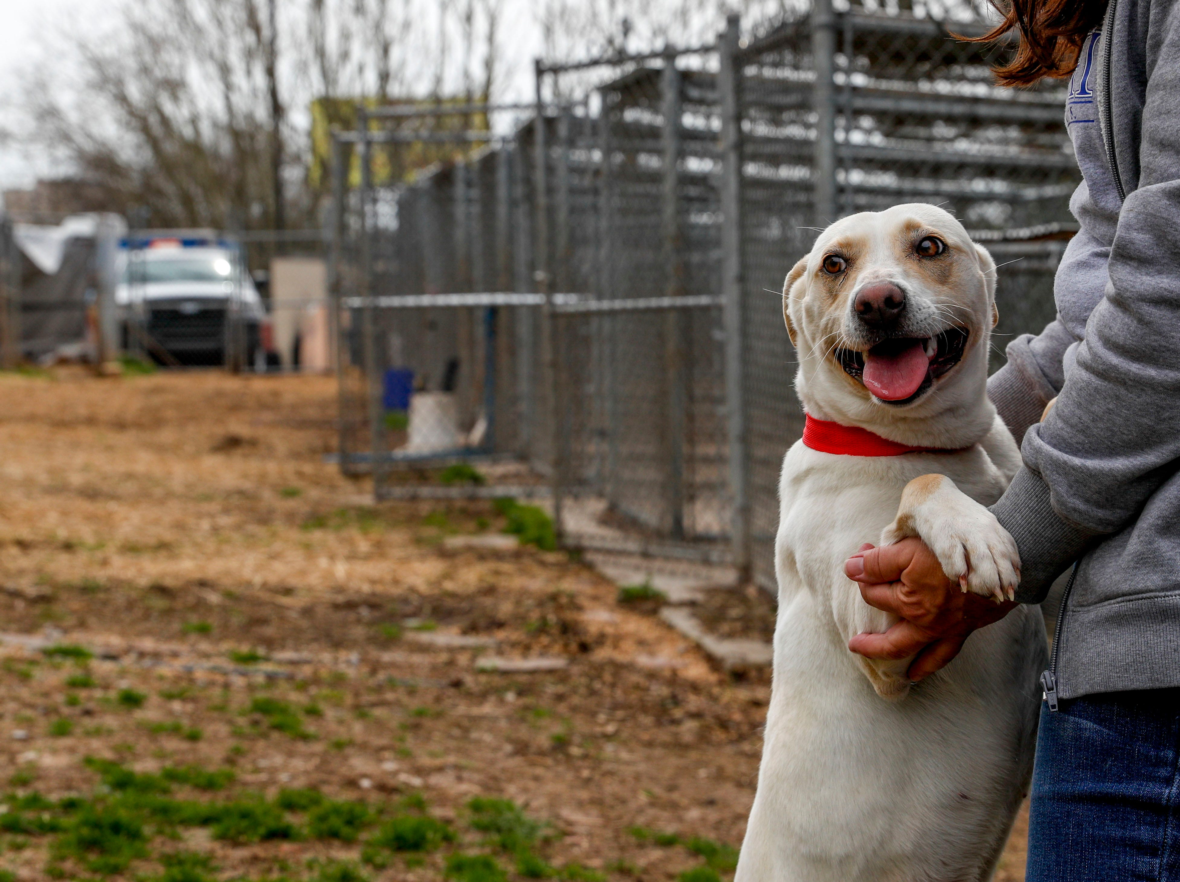 Lucy, a mixed breed, jumps up into the arms of administrative assistant Lori Suiter while playing in the yard at Montgomery County Animal Care and Control in Clarksville, Tenn., on Wednesday, March 13, 2019.