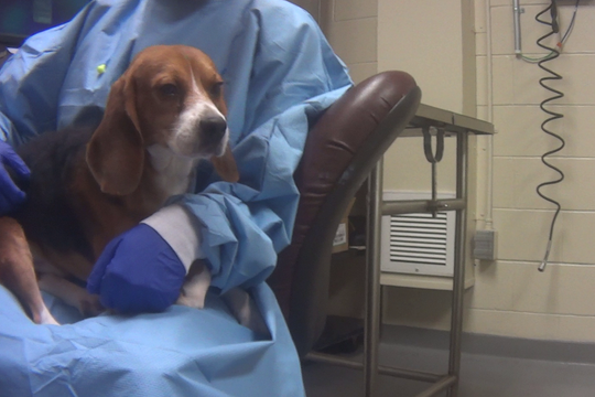 The humane society claims the dogs who survive the tests are scheduled to be euthanized in July.