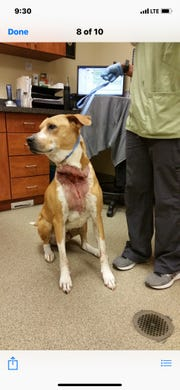 Walter's owner tied his neck so tightly to a pole that the rope embedded in his neck.