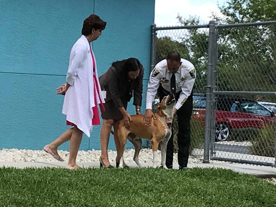 Walter the dog lets Lee County Sheriff Carmine Marceno and State Attorney Amira Fox give him a pat.