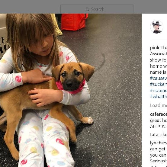 Pink adopts rescue puppy while on tour in Nashville