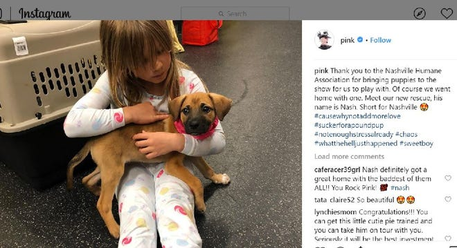 Pink adopted a puppy from the Nashville Humane Association