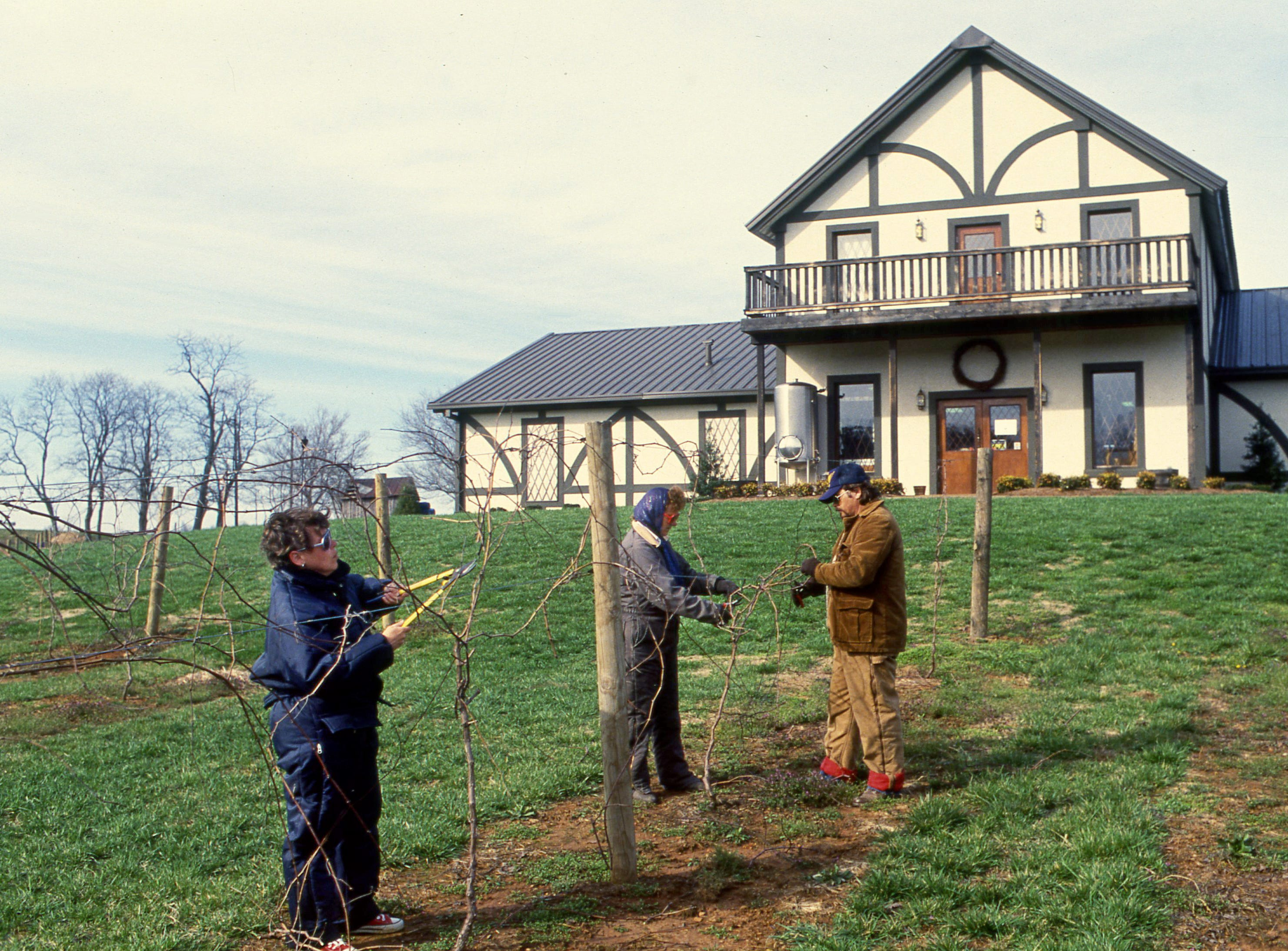 A trio of workers prune some of the 2½ acres of grapes vines growing in front of the English Tudor style Beachhaven Vineyard and Winery in Clarksville on March 22, 1989.