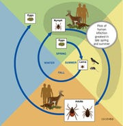 Blacklegged or deer ticks present the greatest threat to people in late spring and summer. But ticks can also be a threat in early spring if the conditions are right.