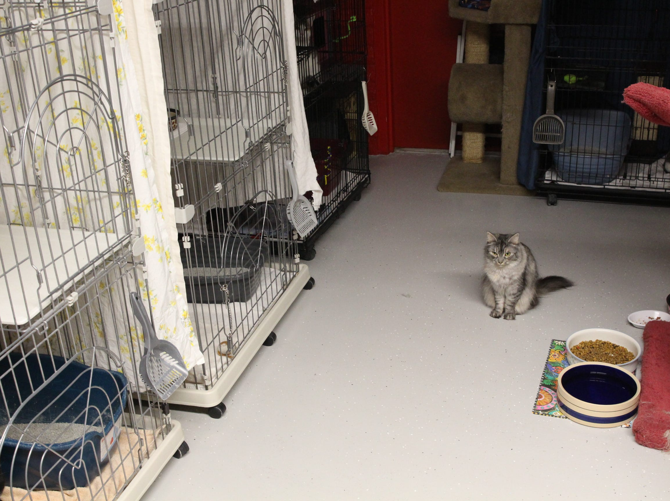 """A Home """"Fur"""" Good cat for adoption sits in the shelter's cat room."""