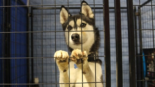 """A dog sits in Home """"Fur"""" Good's isolation room. All dogs are isolated before adoption to treat and diagnose any medical issues."""
