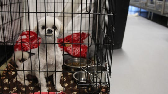 """An adoptable dog sits inside a kennel at north Phoenix's Home """"Fur"""" Good shelter."""