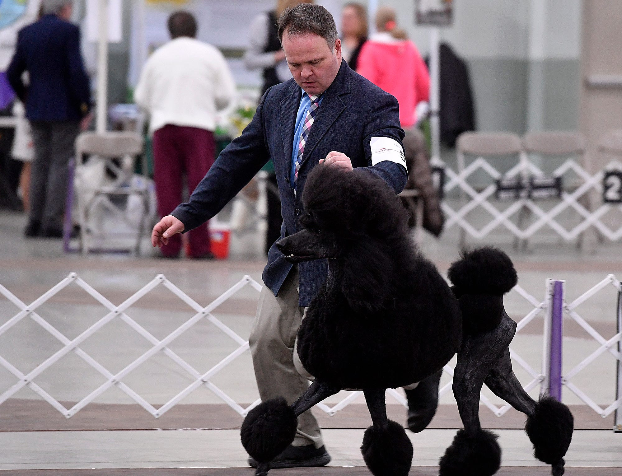 The York Kennel Club, Lancaster Kennel Club and Delaware Valley Kennel Club host the annual Celtic Classic Dog Show, Wednesday, March 13, 2018.