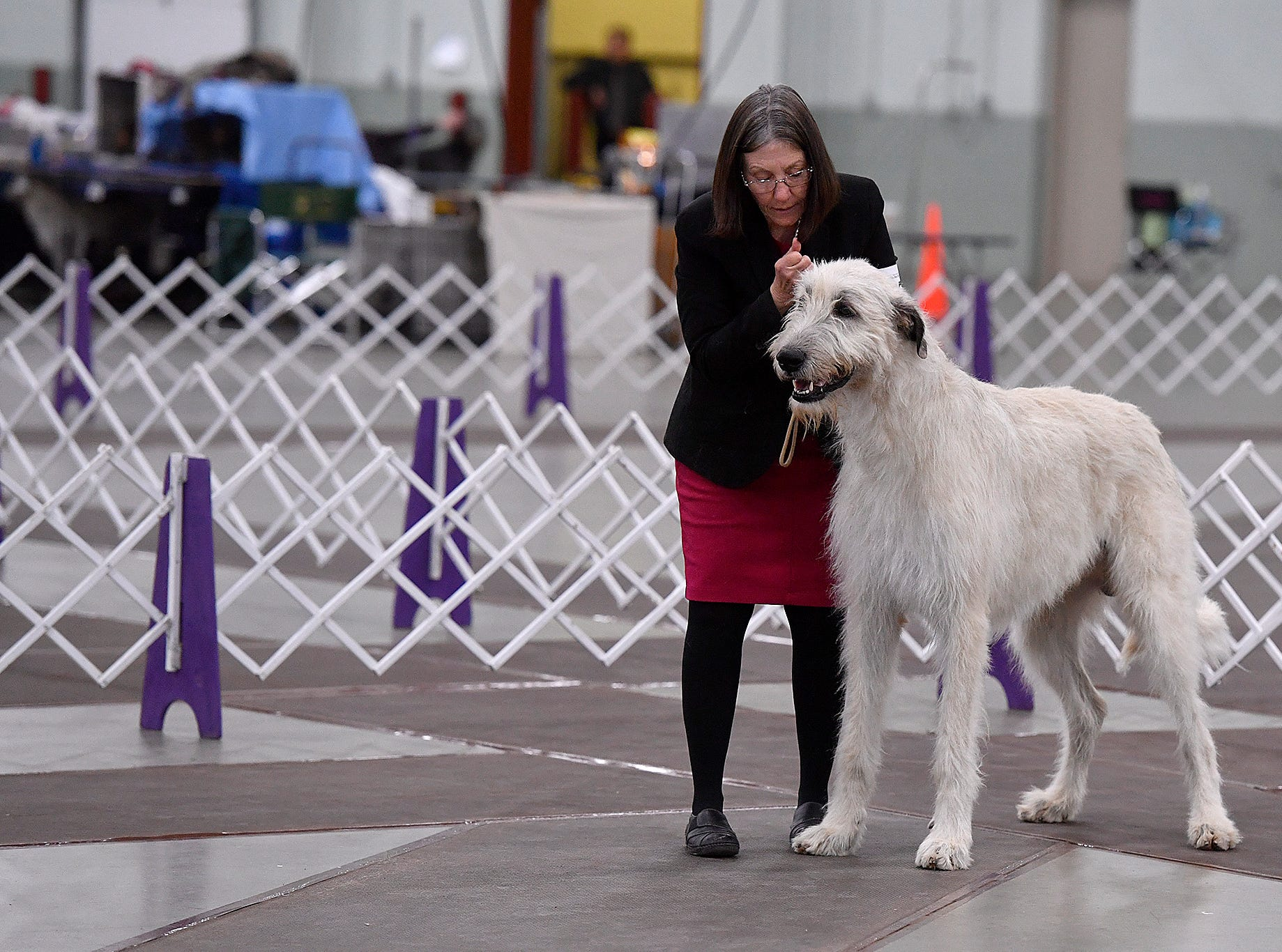 Mary Ellen Shriver of Spring Grove shows Irish wolfhound Amazing Grace during the annual Celtic Classic Dog Show, Wednesday, March 13, 2018.
