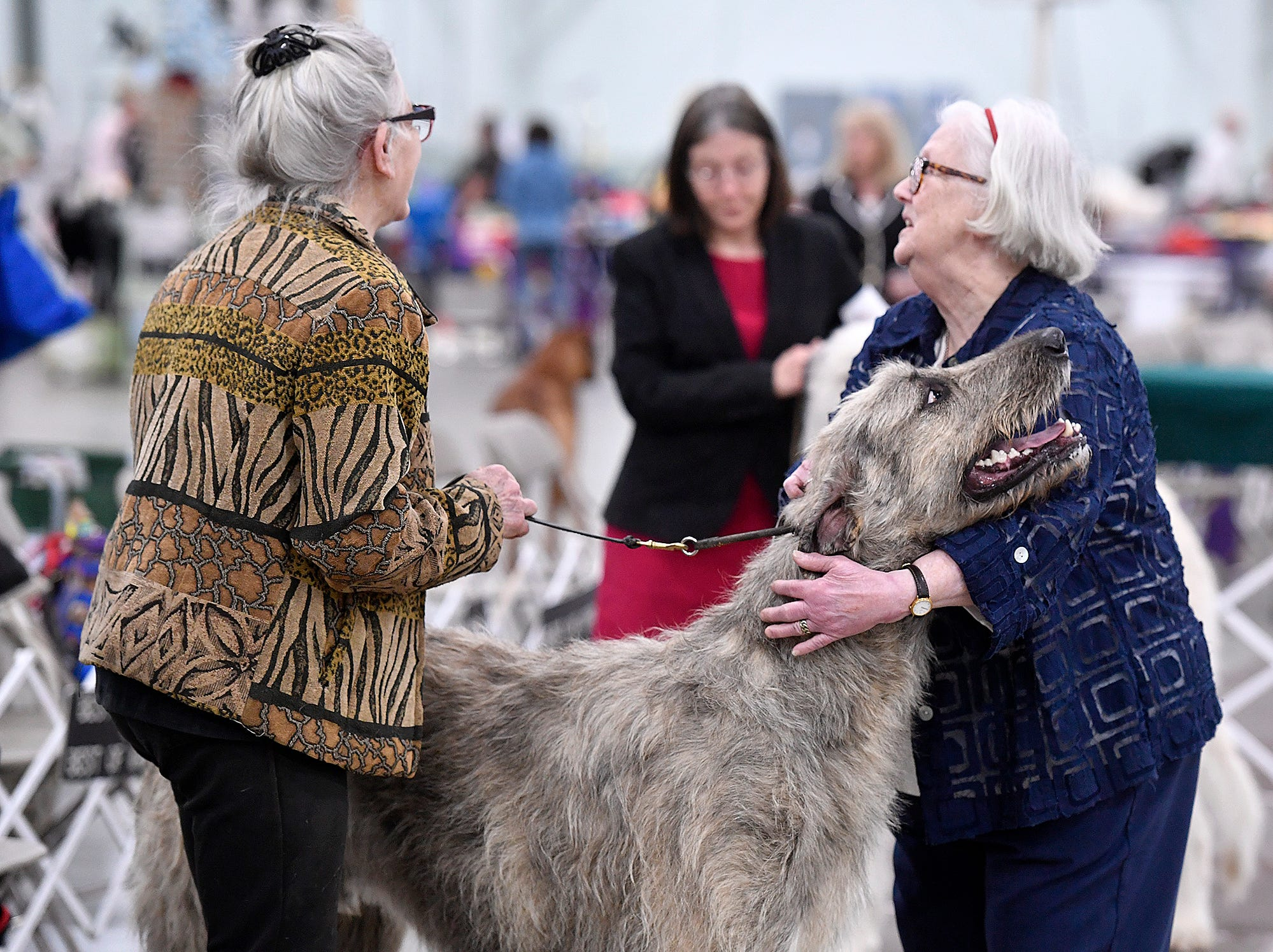 Judge Pricilla Gbosch, right, gets a hug from Irish wolfhound An Awesome Wonder shown by Alice Kneavel, left, of Airville, the annual Celtic Classic Dog Show, Wednesday, March 13, 2018.