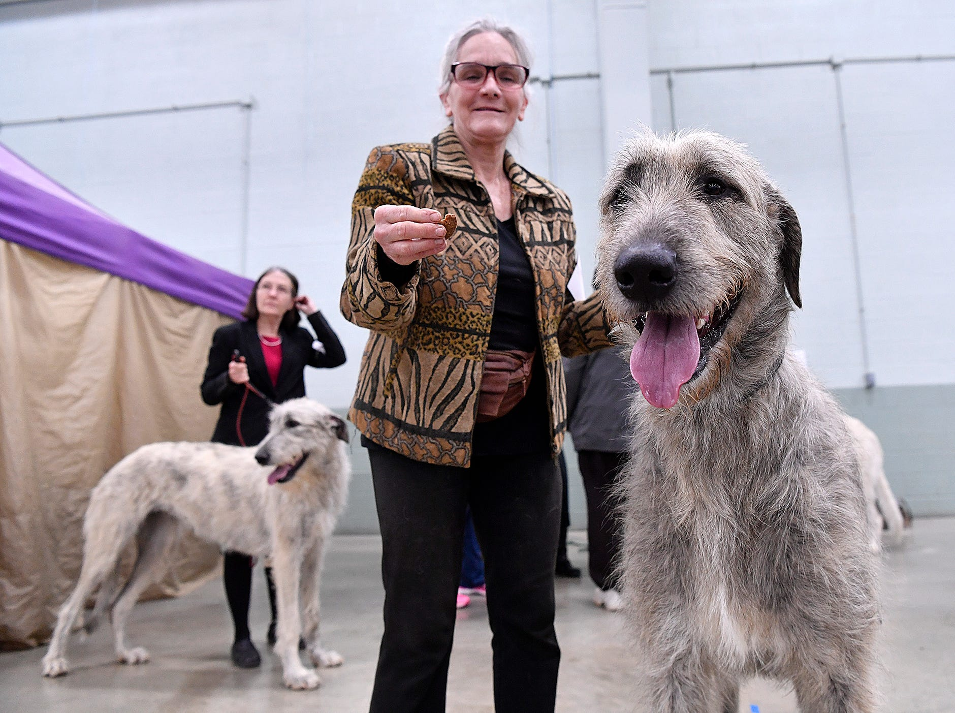 Alice Kneavel, of Airville, and An Awesome Wonder, her Irish wolfhound, wait for their turn in the ring during the annual Celtic Classic Dog Show, Wednesday, March 13, 2018. John A. Pavoncello photo
