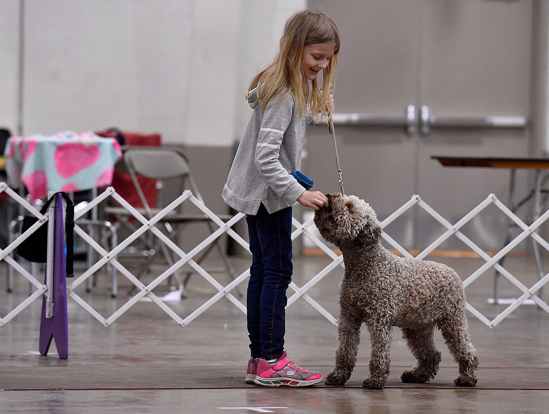 Isabella Stephenson, 8, works with her Lagotto Romagnolo puppy Cinnamon between judging at the annual Celtic Classic Dog Show, Wednesday, March 13, 2018.