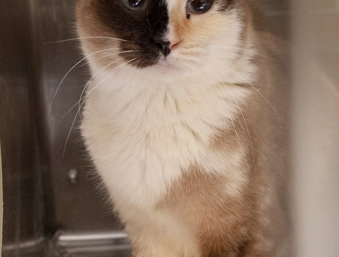 My name is Madame Calculus. I was found on Runkle Road in Chanceford Township. Only 4 years-old, I am shy at first, but will be very loving once I get to know you.