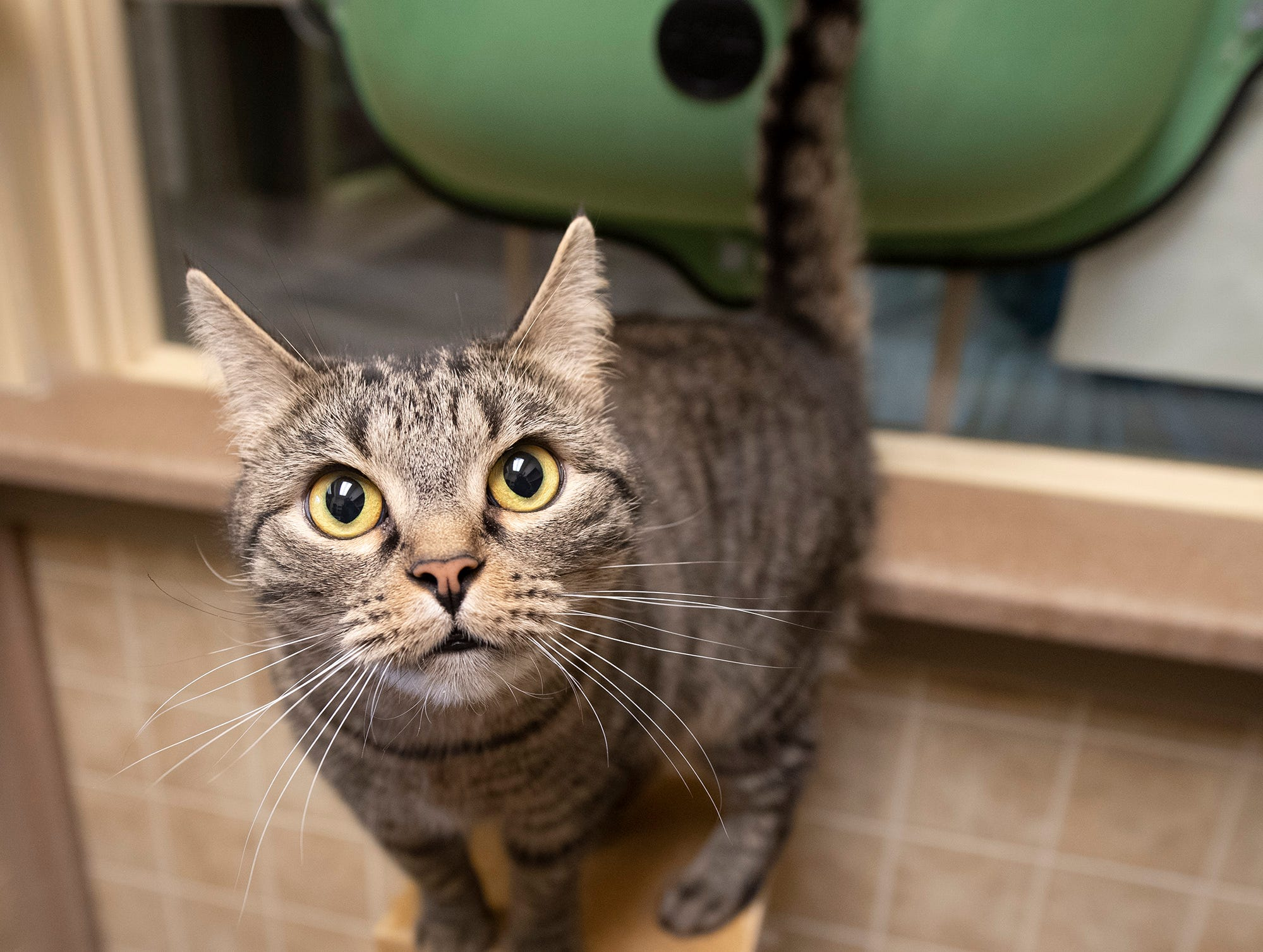 My name is Purricane and I was found on East Market Street in York. I am female and about 4 years old.