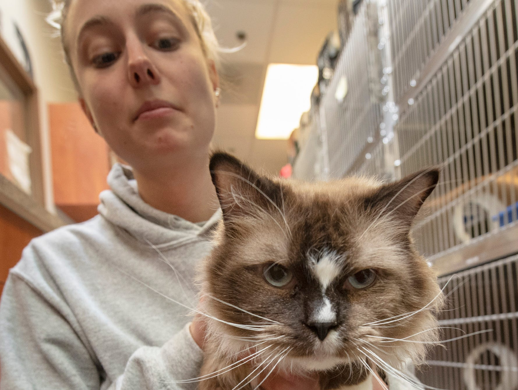 My name is Mr. Hypotenuse. I'm a 5 year-old Himalayan who was found on Charles Street in Chanceford Township. I am very vocal and love to play and cuddle.