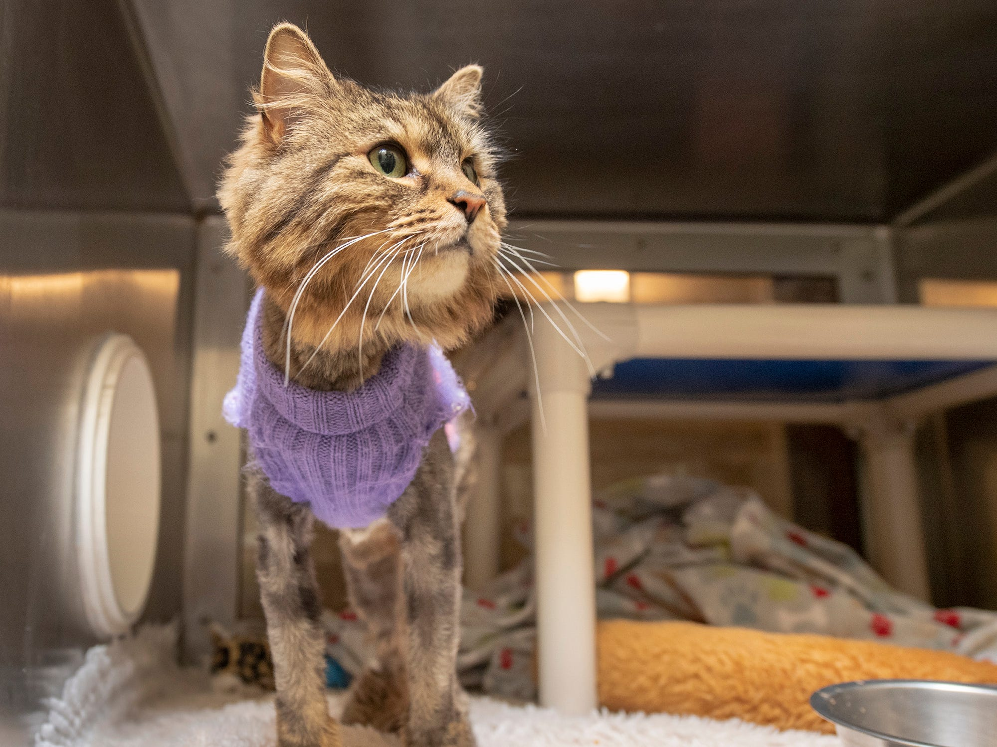 I'm Molly and I came to the York County SPCA because my owner is going into a home and can no longer keep me. I may be 12 years-old, but I am very sweet and would love a home with people to love me again in my senior years. I come with my purple sweater.