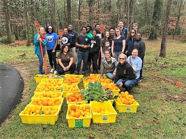 In just two hours, 4-H teens gleaned 684 pounds of produce to be donated to a local food pantry to help combat food insecurity.
