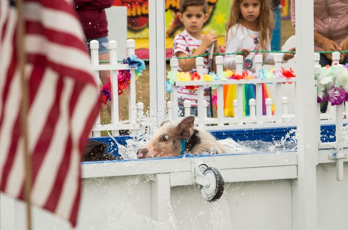 Marco Polo, a pot-bellied racing pig, swims through water as Xander Catlin, 4, and Chelsie Catlin, 6, of Vero Beach, cheer on the competitors at the Firefighters' Indian River County Fair on Tuesday, March 12, 2019, at the Indian River County Fairgrounds.