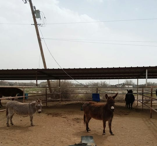El Pasoan Laurie Muller said winds on Tuesday tilted a utility pole in her horse stalls in Clint. She called El Paso Electric to repair it.