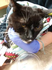 First responders saved this cat from the Yonkers fire and are now looking for its owner.